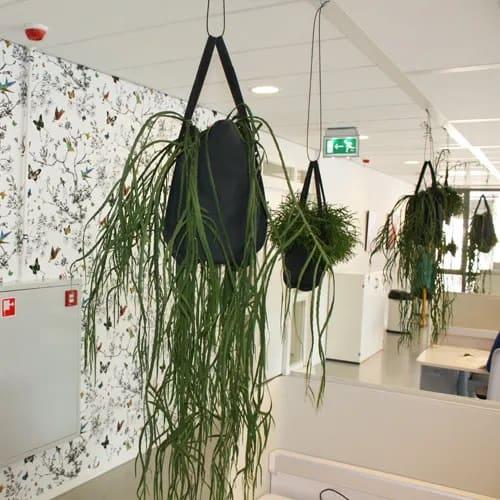 Creatief groen kantoor- Artiplant