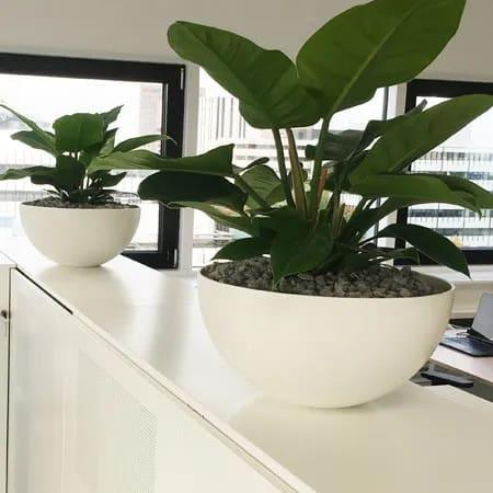 Planten verbeteren het werkklimaat- Artiplant