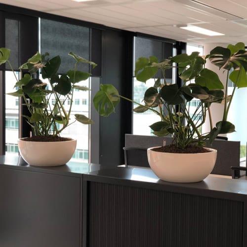 Leuke kantoor bloempotten - leverbaar in elke Ral kleur - Artiplant