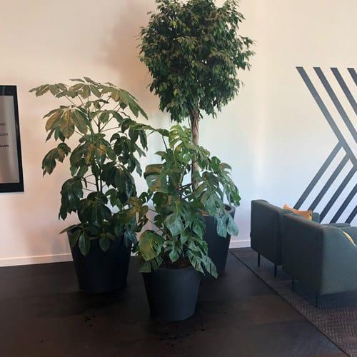 Zakelijke plantenbakken voor een modern interieur - Zuidas- Artiplant