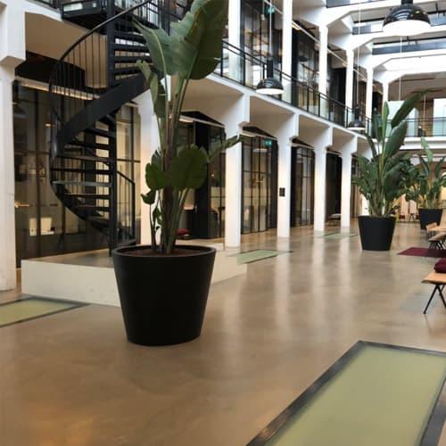 XL kantoorplanten op hydrocultuur - Artiplant