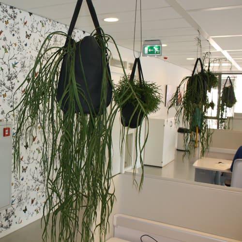 Moderne hangplanten voor een speels kantoor - Artiplant