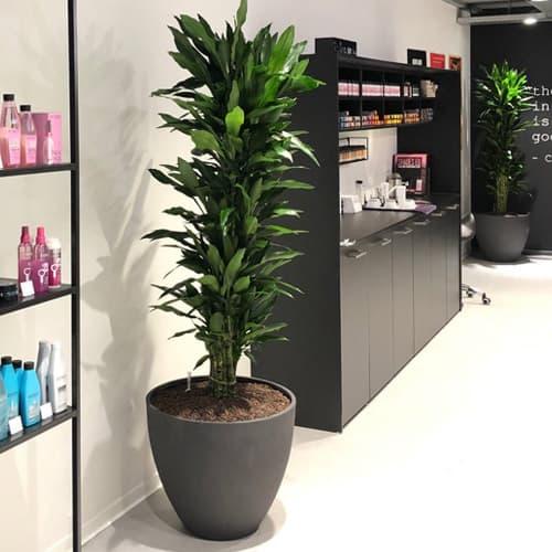 Hydrocultuur kantoorbeplanting winkel - Amsterdam - Artiplant