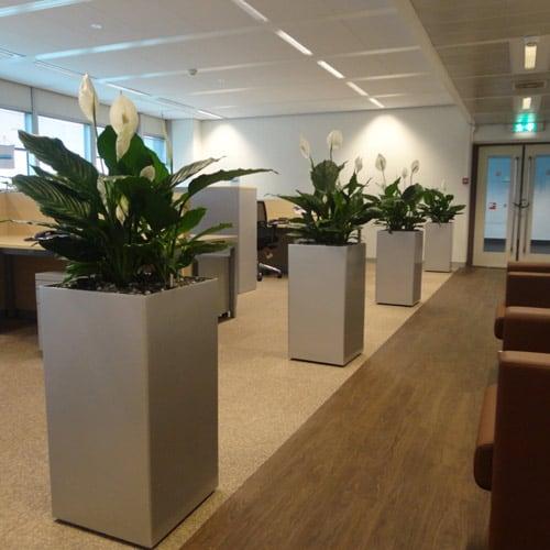 Luchtzuiverende kantoorplanten - ZuidAs - Artiplant