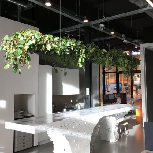 Hangplanten een leuk alternatief - gezonde planten op kantoor - Artiplant