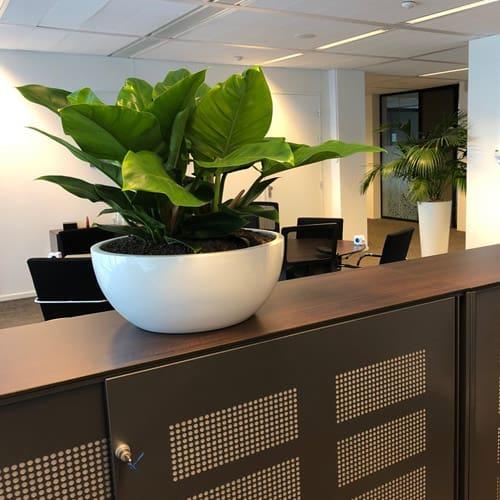 Gezonden planten op de werkvloer - Artiplant