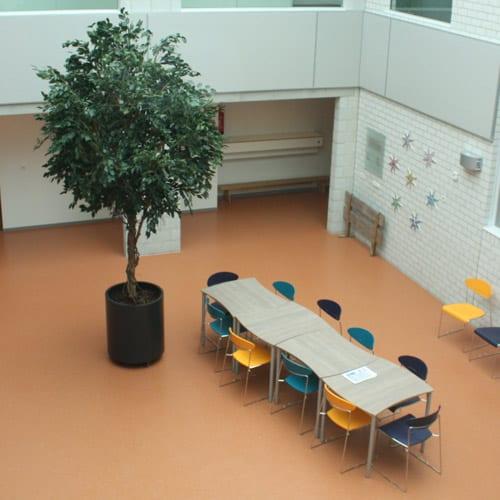 Extra grote bomen voor binnen - Lelystad - Artiplant