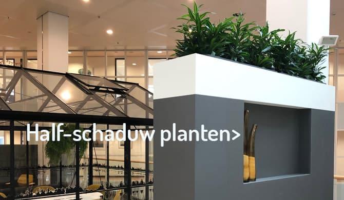 kantoorbeplanting half schaduw locatie- Artiplant