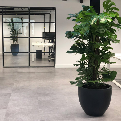 Moderne kantoorplanten - Artiplant