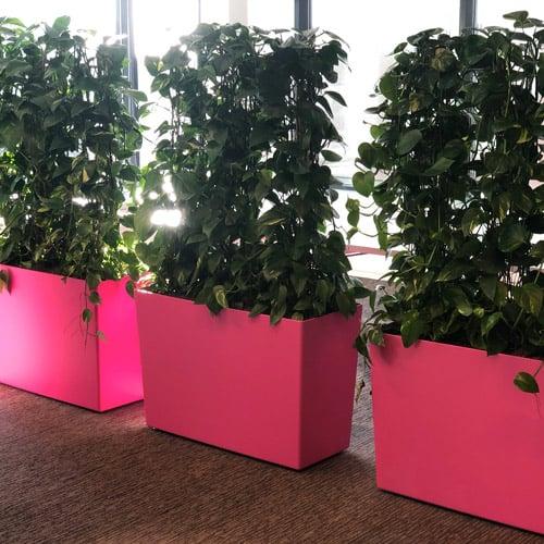 Onderhoudsvriendelijke planten - Den Haag - Artiplant
