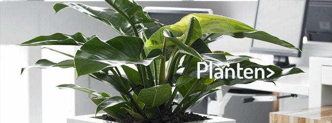 Sterke planten op hydrocultuur