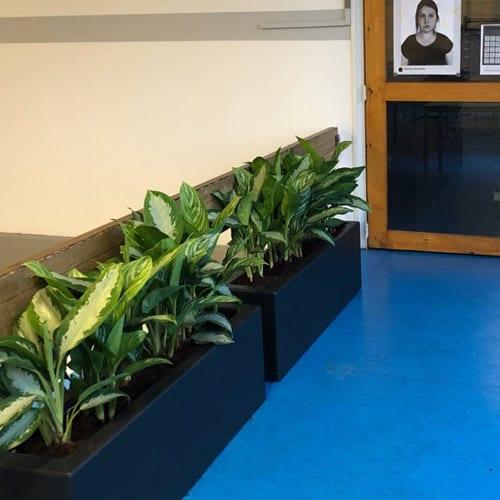 Sterke planten voor op school - Amsterdam - Artiplant