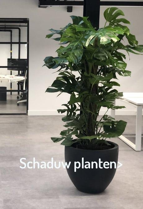 Gezonde en luchtzuiverende planten - Artiplant
