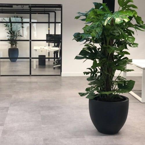 Een creatief groen kantoor- Artiplant