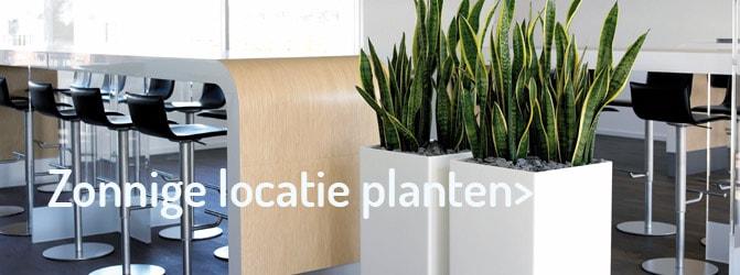 kantoorplanten zonnige locatie -Artiplant
