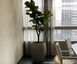 Cementlook plantenbakken